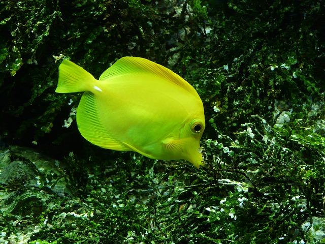 Založte si morské akvárium