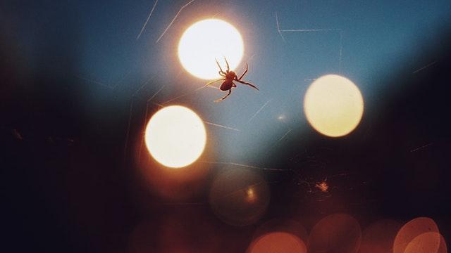 Pavúk spriada pavučinu, za ktorou svieti svetlo.jpg
